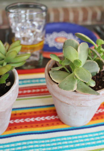 Succulents potted in a terra cotta planter for a fiesta