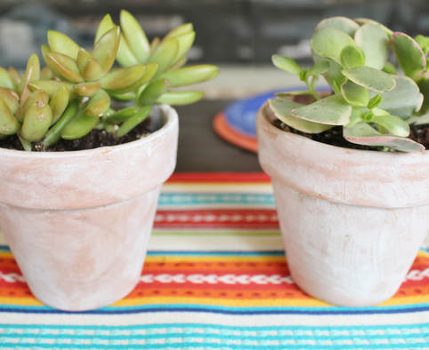 Succulent Centerpieces in whitewashed terra cotta pots